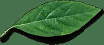 Producto natural con extracto de ajo y cebolla